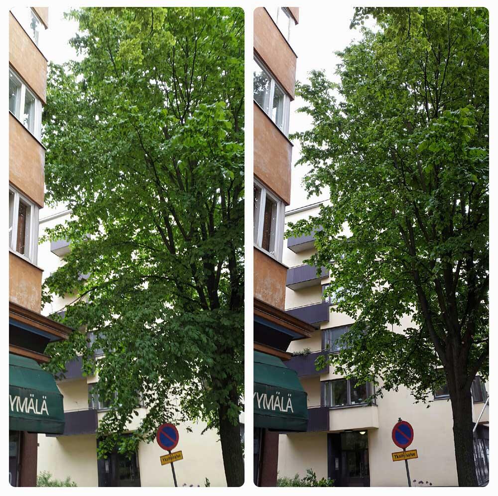 puiden hoitoleikkaus kaupungissa